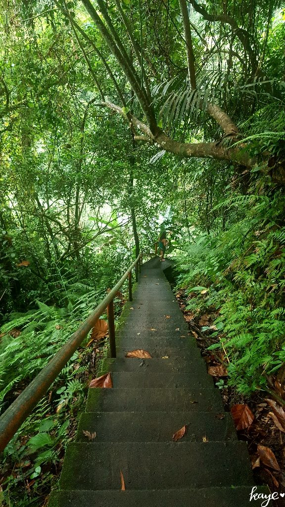 Stairway into the rainforest